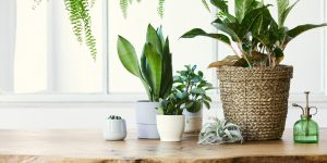 indoor plants cleaning clean area clean house